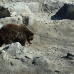 Where's the Bear App: Help or Hindrance?