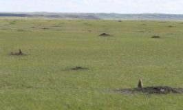 Want to be a prairie dog scientist on your vacation?