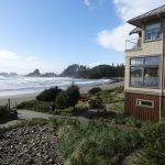 Shorebirds: Tofino's understated tourists
