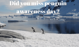 Did you miss penguin awareness day?