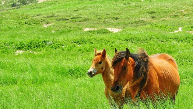 Want to see Sable Island's wild horses?